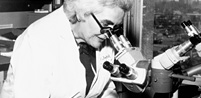 A female doctor looks into a microscope